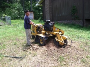 Stump Grinding - On Call Tree Service - Chattanooga Tree Service, Pruning, and stump removal