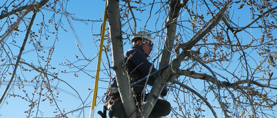 Chattanooga Tree Worker
