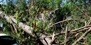 Tree Service in Chattanooga